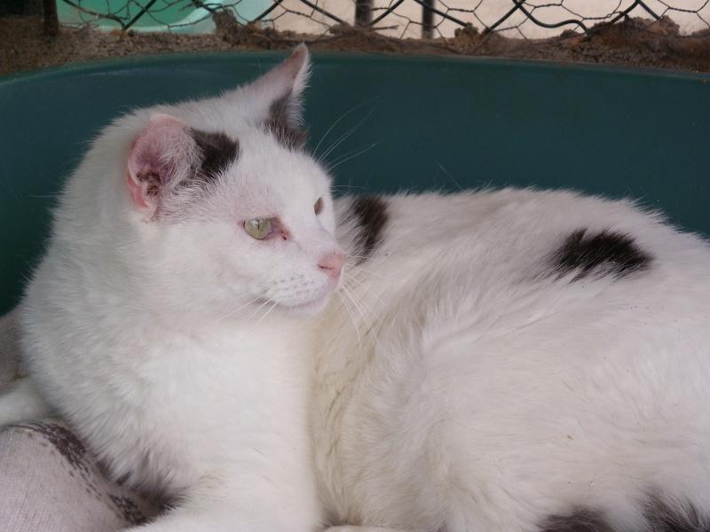 NEILS (européen blanc queue grise) Imgp9020