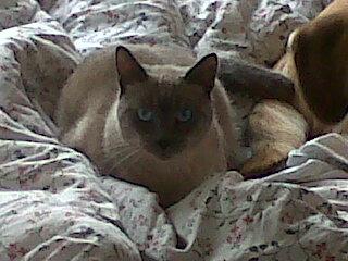Photos des chats sauvés, avant/après Attila10