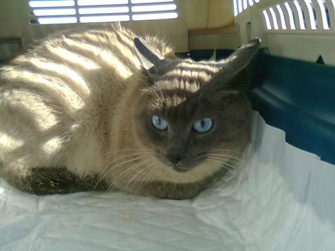 Photos des chats sauvés, avant/après Eliott10