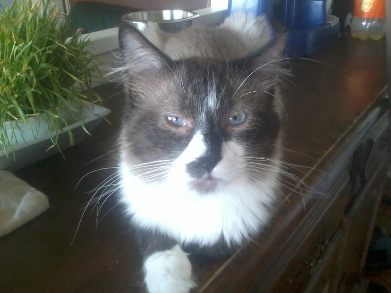 Photos des chats sauvés, avant/après Portra10