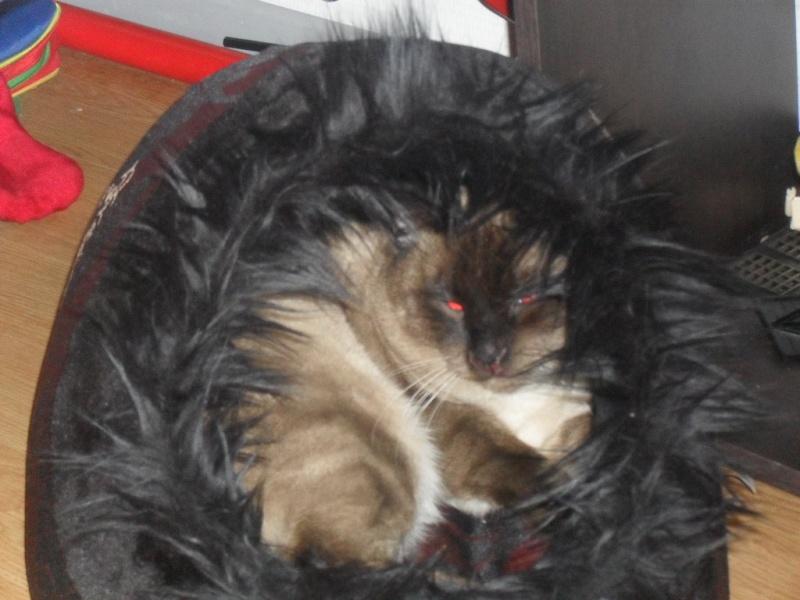 Photos des chats sauvés, avant/après Sdc12410