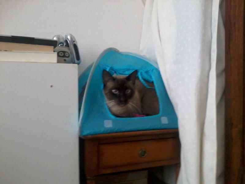 Photos des chats sauvés, avant/après Tipi10