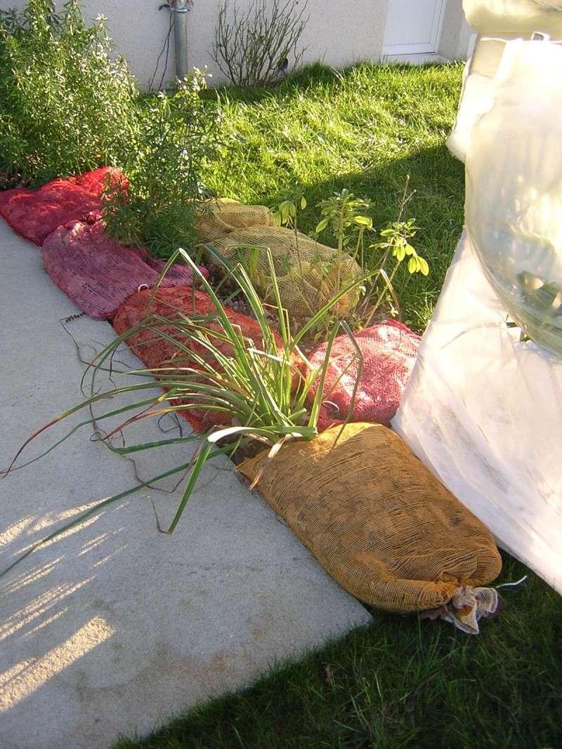 comment on protège les plantes contre le froid Dscn0313