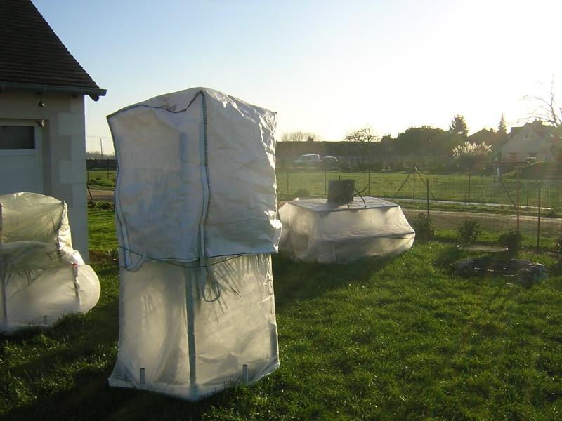 comment on protège les plantes contre le froid Dscn0314
