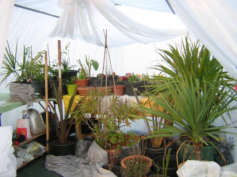 comment on protège les plantes contre le froid Dscn0318