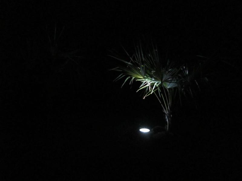 Eclairage des plants Img_0416