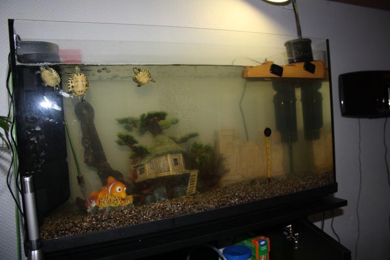 Probleme Aqua Debutant