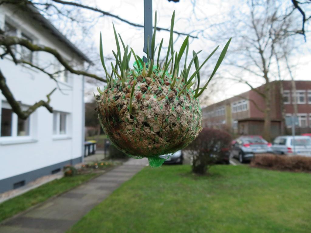 Erste Frühlingsboten im Garten und in Wald und Flur, Teil 2 Img_0116