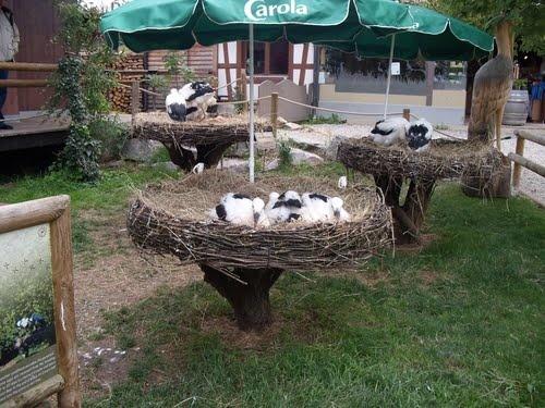 STREET VIEW : les cigognes et leurs nids  Hunawi10