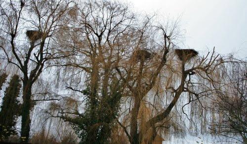 STREET VIEW : les cigognes et leurs nids  Hunawi12