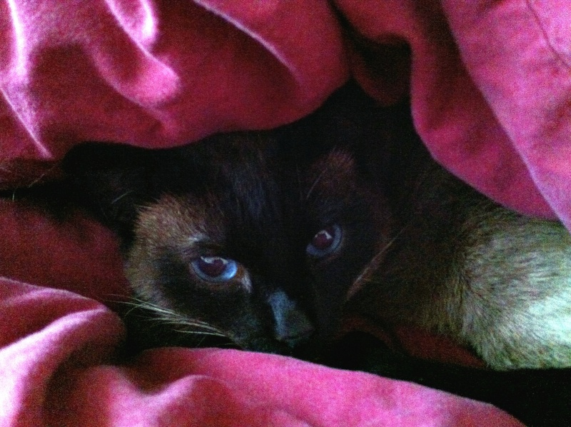 Photos des chats sauvés, avant/après Img_6413