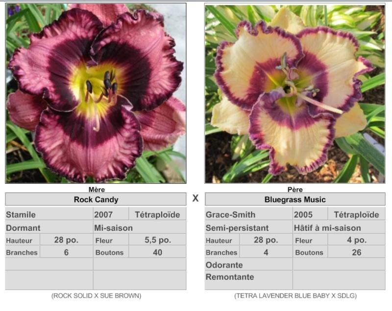 Mes hybrides: Semis 2013 au jardin - Page 2 1327810