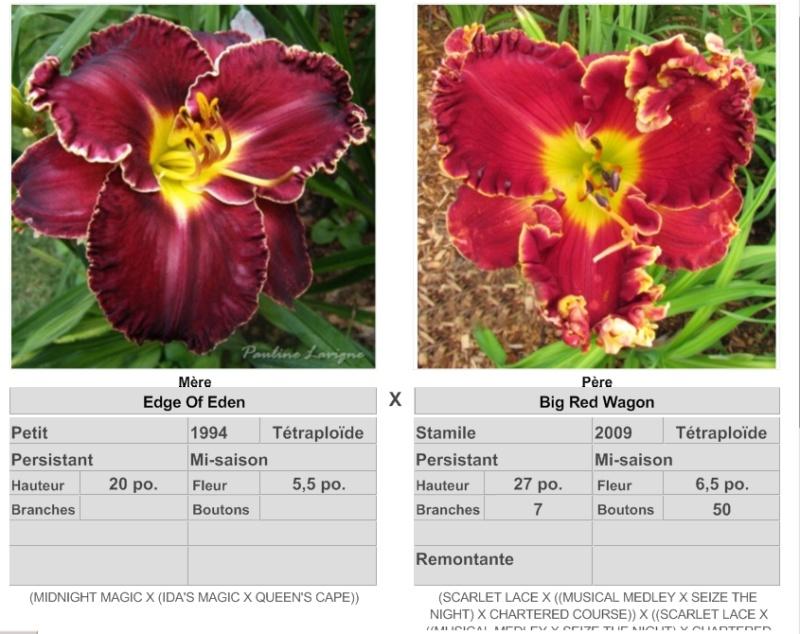 Mes hybrides: Semis 2014 au jardin 1407810