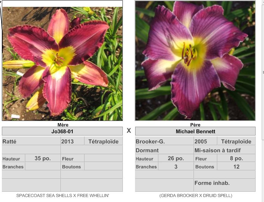 Mes hybrides: semis 2015 à sélectionner 15001_10