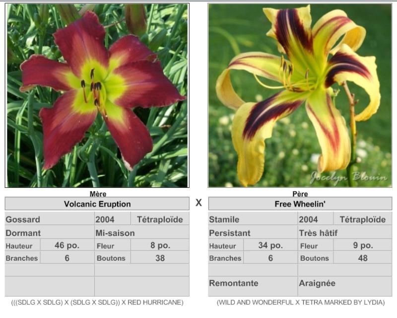 Mes hybrides: semis 2015 à sélectionner - Page 2 15084_10