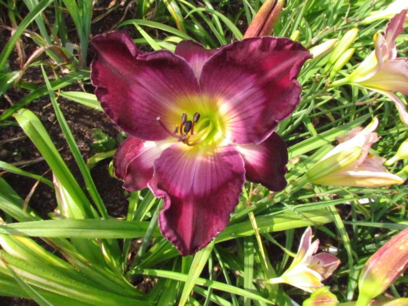 Mes hybrides: semis 2015 à sélectionner - Page 2 15094-11