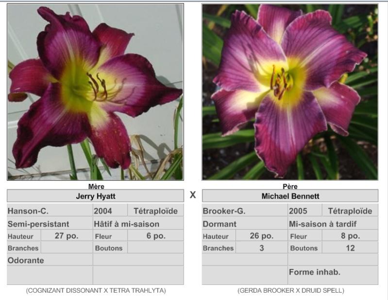 Mes hybrides: semis 2015 à sélectionner - Page 2 15094_10