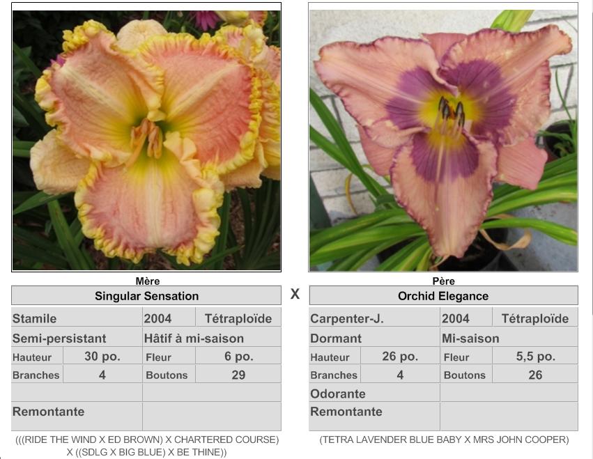 Mes hybrides: Semis 2016 à sélectionner - Page 2 16059_10