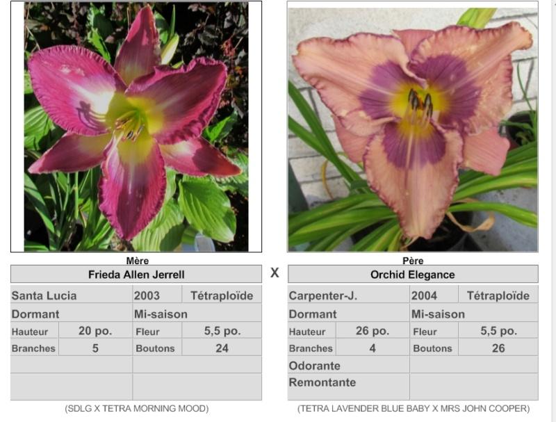Mes hybrides: Semis 2016 à sélectionner - Page 2 16062_10