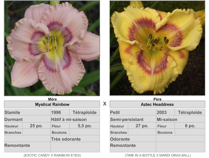 Mes hybrides: Semis 2016 à sélectionner - Page 2 16067_10