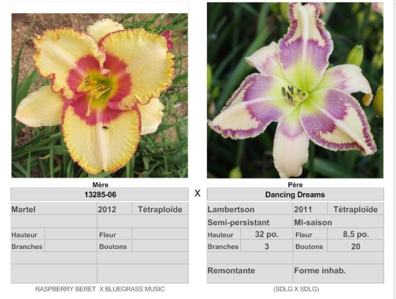 Mes hybrides: Semis 2016 à sélectionner - Page 4 16157_10