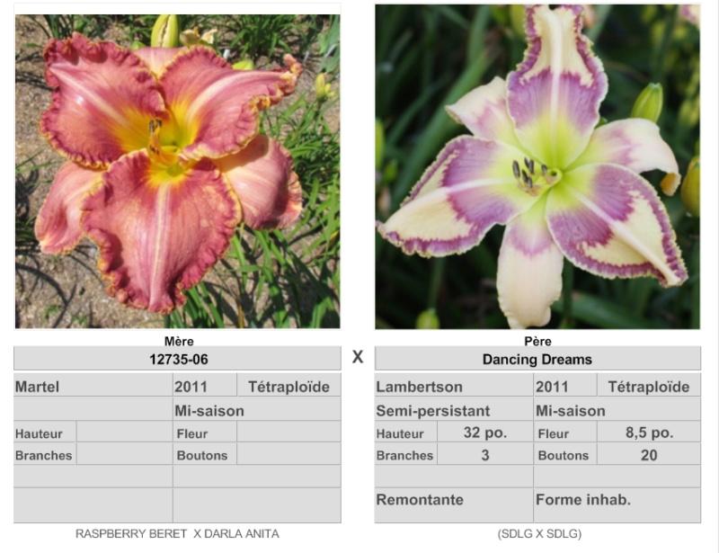 Mes hybrides: Semis 2016 à sélectionner - Page 4 16159_10