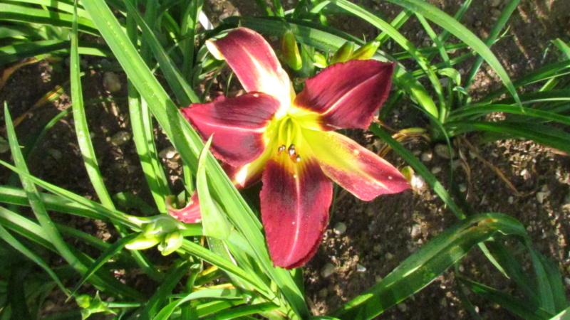 Mes hybrides: Semis 2016 à sélectionner - Page 4 16165-10