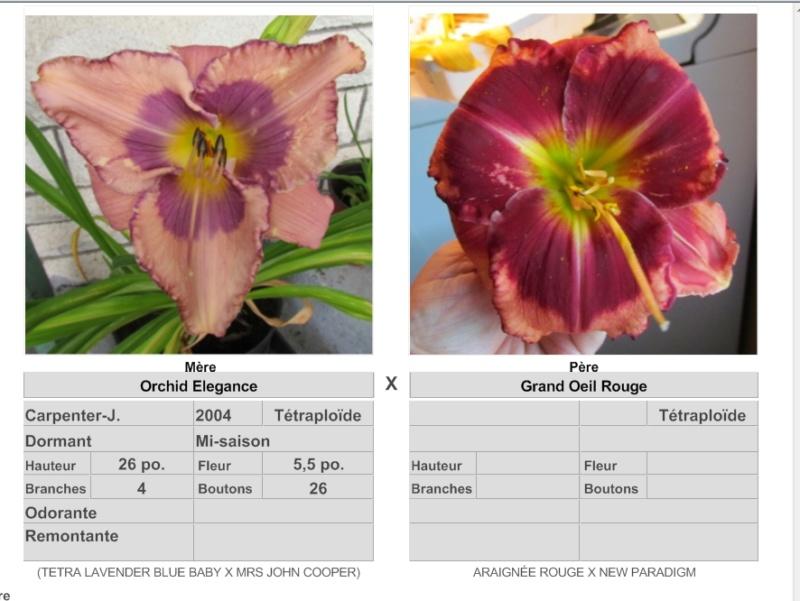 Mes hybrides: Semis 2016 à sélectionner - Page 4 16174_10