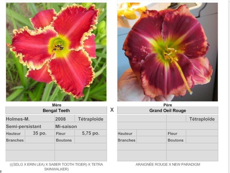 Mes hybrides: Semis 2016 à sélectionner - Page 4 16175_10