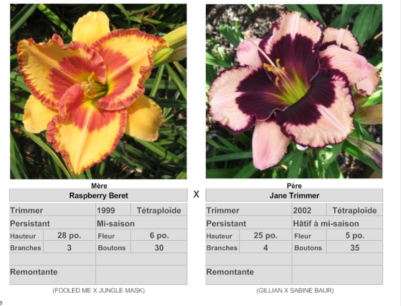 Mes hybrides: Semis 2016 à sélectionner - Page 4 16194_10