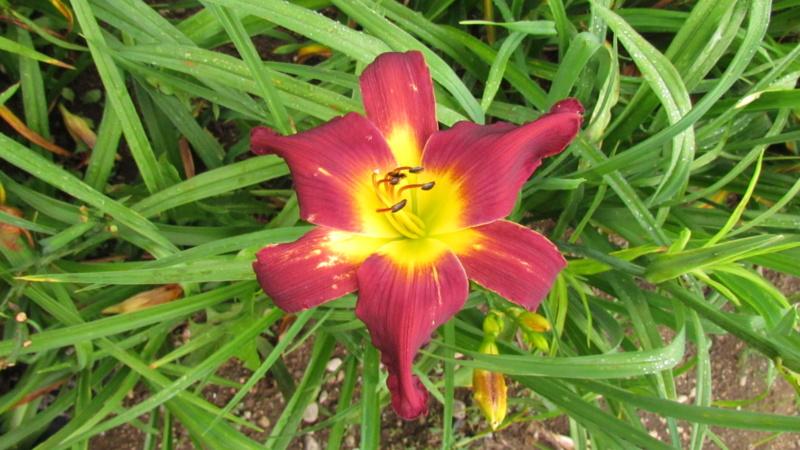 Mes hybrides: Semis 2016 à sélectionner - Page 7 16449-10