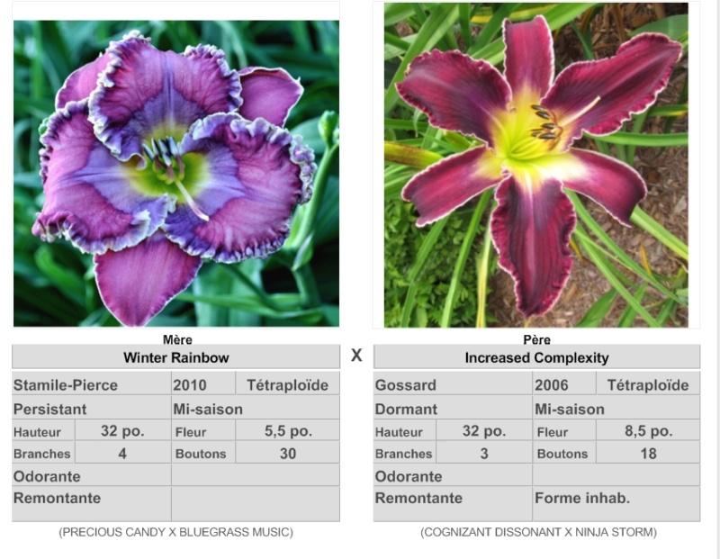 Mes hybrides: Semis 2016 à sélectionner - Page 7 16455_10