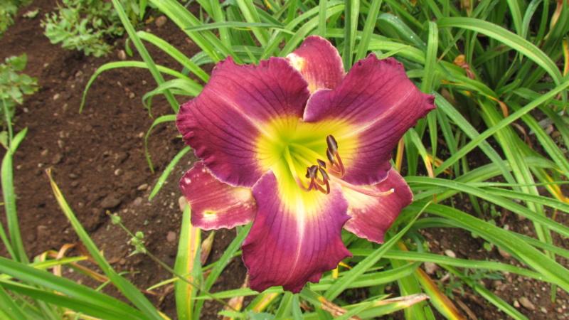 Mes hybrides: Semis 2016 à sélectionner - Page 7 16457-10