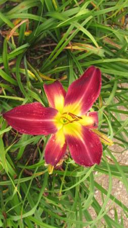 Mes hybrides: Semis 2016 à sélectionner - Page 7 16518-11