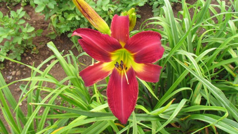 Mes hybrides: Semis 2016 à sélectionner - Page 7 16518-12