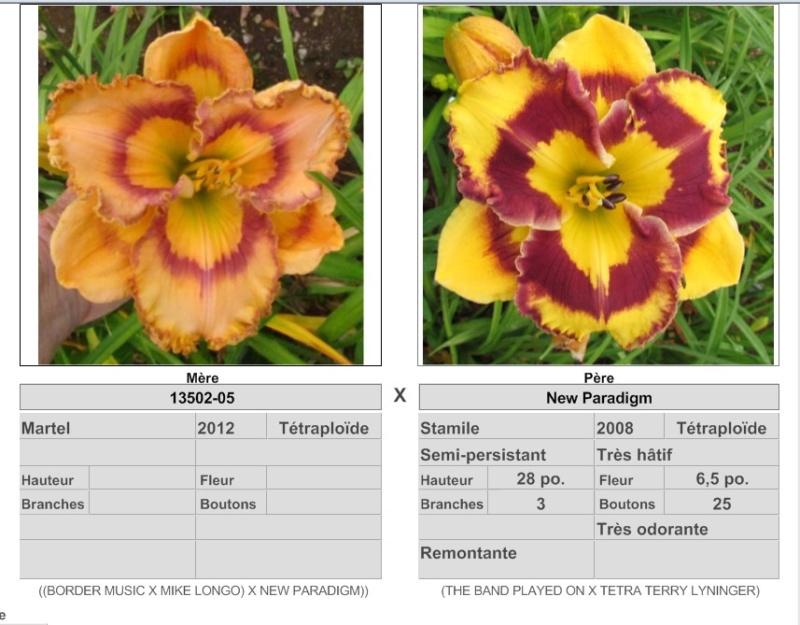 Mes hybrides / Semis 2017 à sélectionner (croisements de 2016) Ajouts photos 2019 - Page 2 17251_10