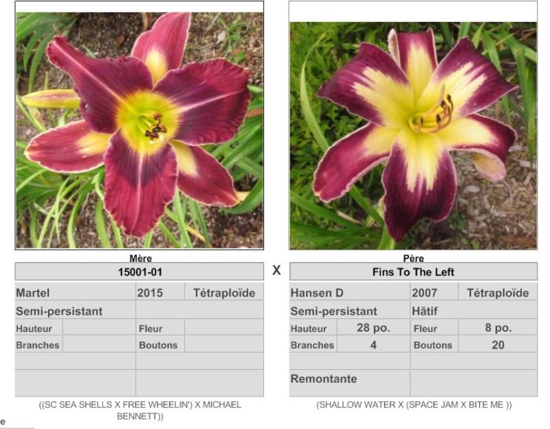 Mes hybrides / Semis 2017 à sélectionner (croisements de 2016) Ajouts photos 2019 - Page 4 17336_10
