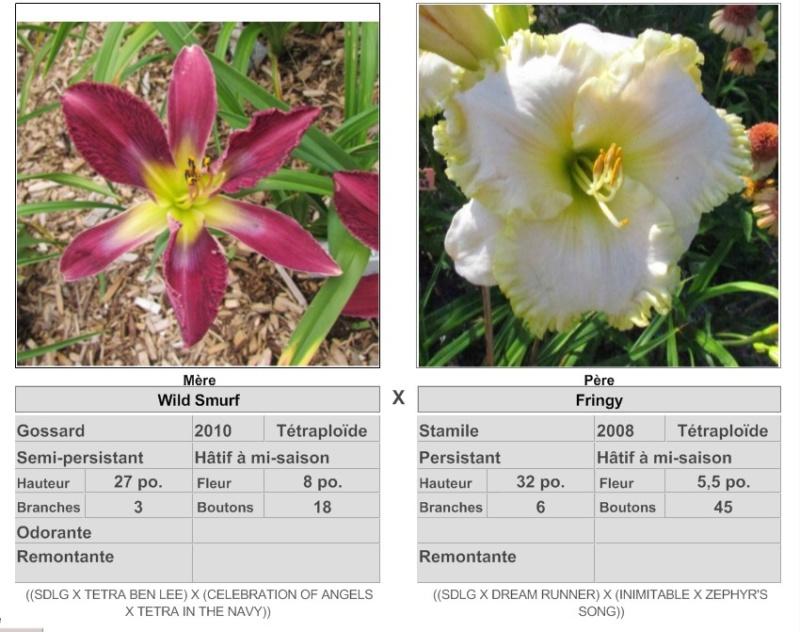 Mes hybrides / Semis 2017 à sélectionner (croisements de 2016) Ajouts photos 2019 - Page 4 17387_10