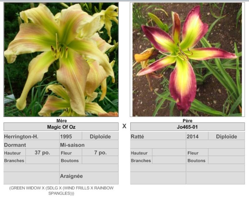 Mes hybrides / Semis 2017 à sélectionner (croisements de 2016) Ajouts photos 2019 - Page 4 17398_11