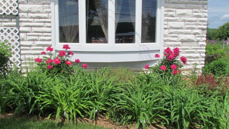 Les pivoines de mon jardin 24-06-10
