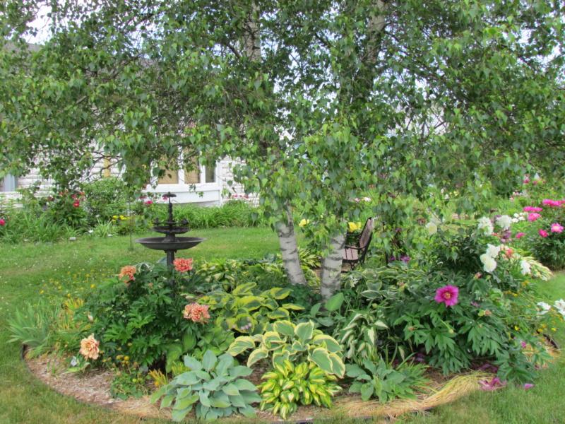 Les pivoines de mon jardin 29-06-11