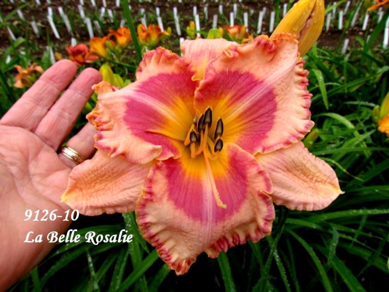 Mes hybrides: semis 2009 encore au jardin. 9126-111