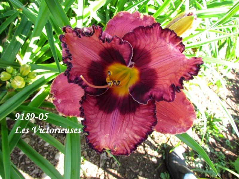 Mes hybrides: semis 2009 encore au jardin. 9189-010