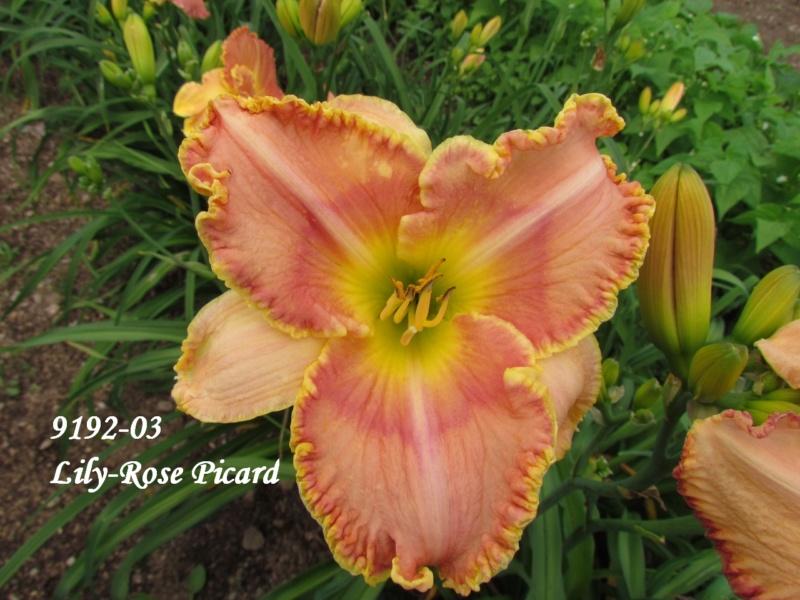 Mes hybrides: semis 2009 encore au jardin. 9192-010