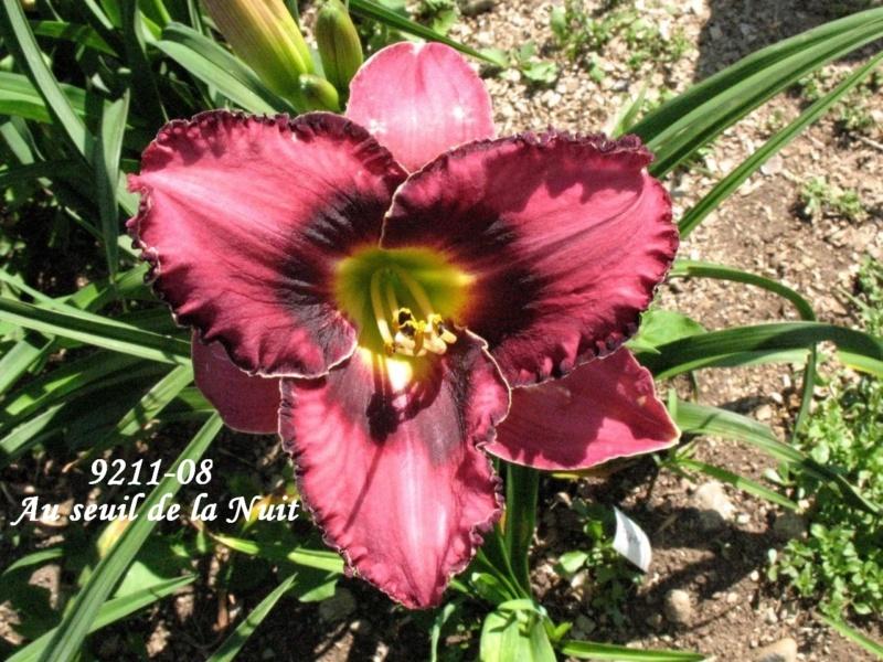 Mes hybrides: semis 2009 encore au jardin. 9211-010