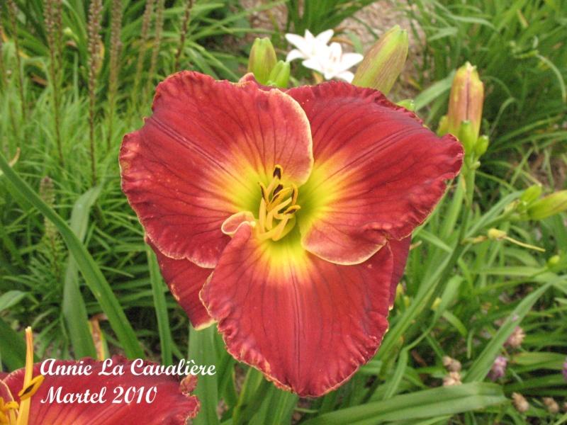 Les hémérocalles enregistrées de mon jardin - Page 3 Annie_11