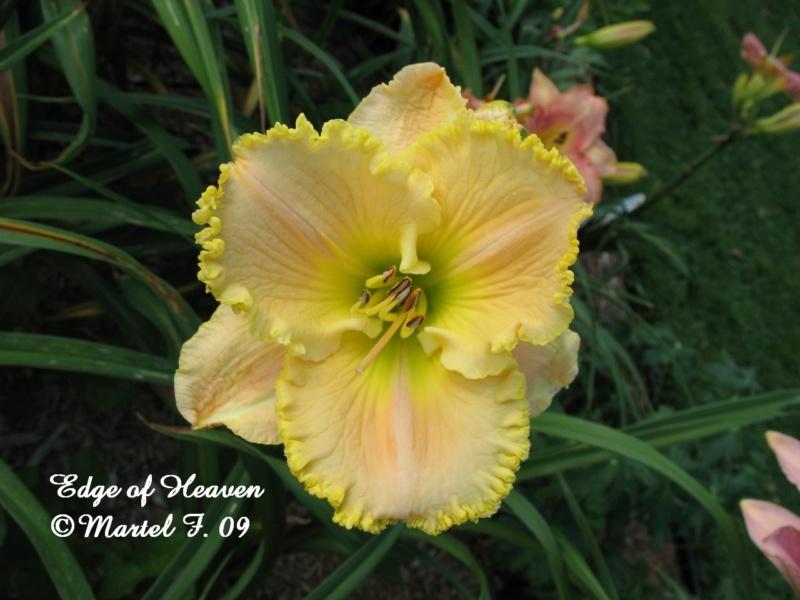 Les hémérocalles enregistrées de mon jardin - Page 2 Edge_o10