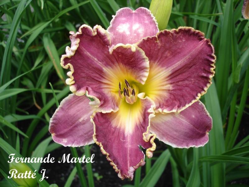 Les hémérocalles enregistrées de mon jardin - Page 2 Fernan10