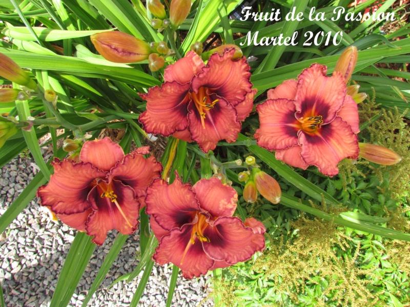 Les hémérocalles enregistrées de mon jardin - Page 2 Fruit_11