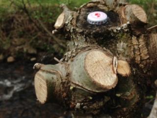 Production de bois de chauffage : la taille têtards (ou trognes, chapoules, charpoules...) - Page 2 Img_0410